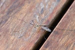 婴儿被蚊子叮咬怎么办怎么预防宝宝被蚊子叮咬